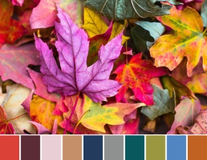 fall color palette inspiration